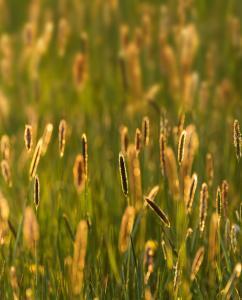 photo d'un champs avec hautes herbes à contre jour